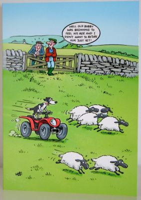 Blank Humour Greeting Card with envelope for any Occasion Bobby the Sheep Dog 10509